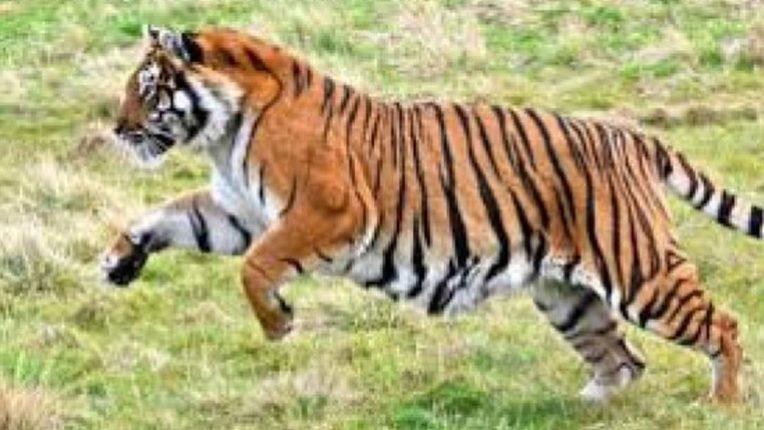 वर्षभर में जिले में वन्यप्राणियों की हमले में 23 की मृत्यु