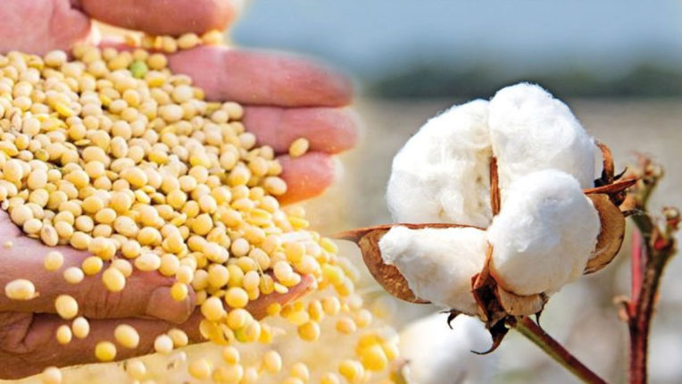 Soybean and Cotton