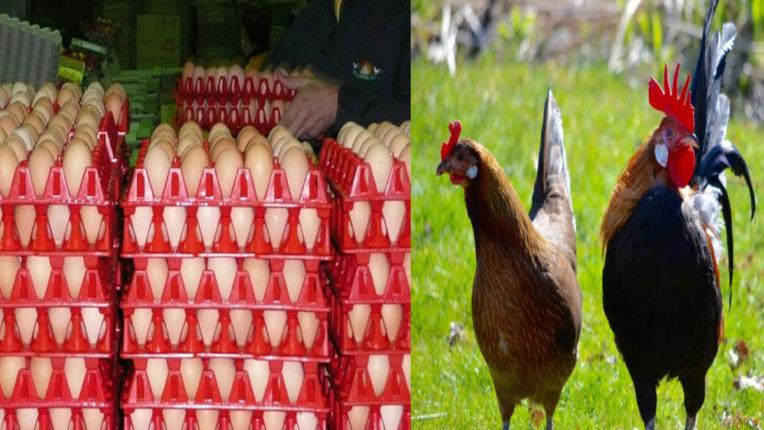 बर्ड फ्ल्यू की दहशत से चिकन की मांग घटी, अंडों के दामों में गिरावट