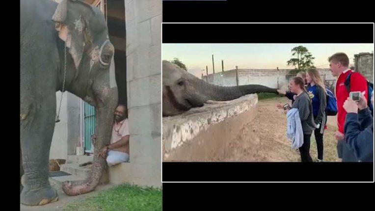 लोगों के फोटो खींचने से शरमाई हथिनी, महावत से की शिकायत, देखें वीडियो